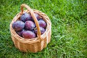 Organic Ripe Plums In A Basket