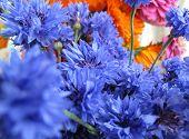 Bright Blue Cornflowers Flowers