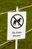 No Dogs Please