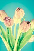 Tulips Cross Processed