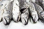 image of hake  - hake in the store - JPG