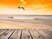 gable flying over the deserted beach