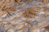 Grass Hoarfrost Pattern Background
