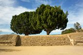 Monte Alban Oaxaca Tree Up The Stairs