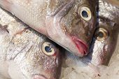 pic of red snapper  - Raw red snapper on ice at a farmer - JPG