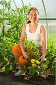 Woman Picking  Green Pepper