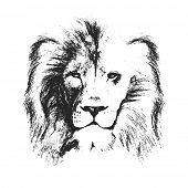 picture of lions-head  - lion head - JPG