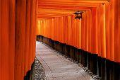 picture of inari  - Red Tori Gate at Fushimi Inari Shrine in Kyoto - JPG