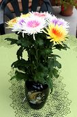 Chrysanthemums In Vase On The Table