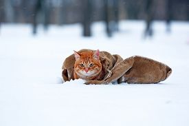 image of blanket snow  - Cute red cat wrapped in blanket on snow background - JPG