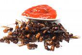 foto of ant  - ried ant  - JPG