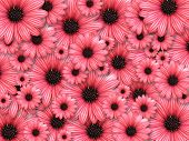 Background made from red flowers