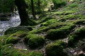Moos Steine nahe dem Fluss
