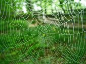 image of spider web  - a spider web with mroning dew on it - JPG