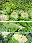 foto of escarole  - a collage of four pictures of different vegetables - JPG