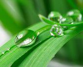 gotas com grama verde