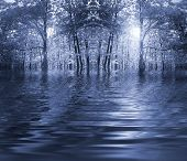 Blue Forest By A River