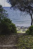Detail View Of Tasmanian Beach With Rocks And Bush Trees On An Overcast Day poster