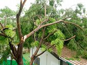 Fallen Tree On The Roof After Big Storm poster