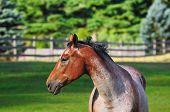 Perfil de caballo