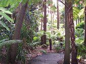Melbourne Botanic Gardens Fern Gully Path