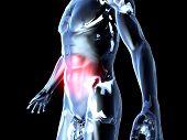 Bauchschmerzen - Anatomie...