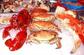 stock photo of norway lobster  - Crabs  - JPG