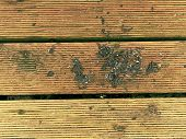 Hardwood Board Made Of Hardwood Resists Weathering. Wooden Pier Above Sea. Touristic Mole With Still poster