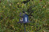 Birdhouse In Dogwoods