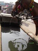 Horse At Water