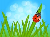 Ladybug On Wet Grass