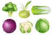 Cabbage Set. Green Nutrition Agricultural Objects Vegetarian Food Natural Healthy Fresh Products Vec poster