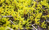 Blurred Background Of Bright Moss Closeup. Beautiful Moss On The Floor, Macro. Beautiful Background  poster