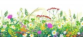 Seamless Line Horizontal Border Made With Summer Meadow Plants. Green Grass And Wild Flowers In Row  poster