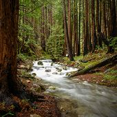 Creek Rushes Through Charred Redwood Forest In Pacific Northwest poster