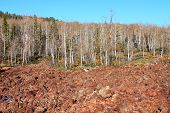 Dixie National Forest Lava Field