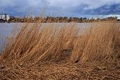 Dry Grass Near Industrial Area Of Parnu Bay In Evening. It A Bay In The Northeastern Part Of The Gul poster