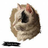 Turkish Van Cat Landrace Of Domestic Cat Isolated Animal. Digital Art Illustration Pussy Kitten Port poster