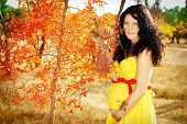 picture of belly-band  - Beautiful pregnant woman with red band on belly autumn outdoors - JPG