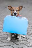 picture of carry-on luggage  - homeless dog holding a blue big bag - JPG