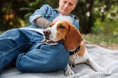 Photo of handsome young man in denim clothes sitting on blanket in park with his canine dog poster