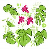 Tropical Hand Draw Vector Collection With Monstera Leaves, Palms Leaf, Pink Tropic Flowers, Mixed Wi poster