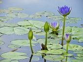 Wasser Lilienteich