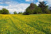 yellow meadow with rural road and beautiful clouds