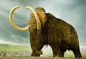 stock photo of mammoth  - A giant woolly mammoth in a museum - JPG
