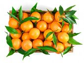 Ripe tangerines with leaves in box on white background