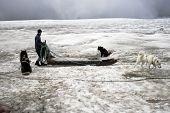 Dogsledding On A Glacier In Iceland