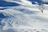 Sträucher und Schnee-Formationen