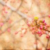 Artistic Pink Spring Buds