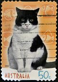 AUSTRALIA - CIRCA 2004: A stamp printed in australia shows a cat circa 2004